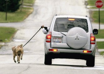 samochod-pies-spacer