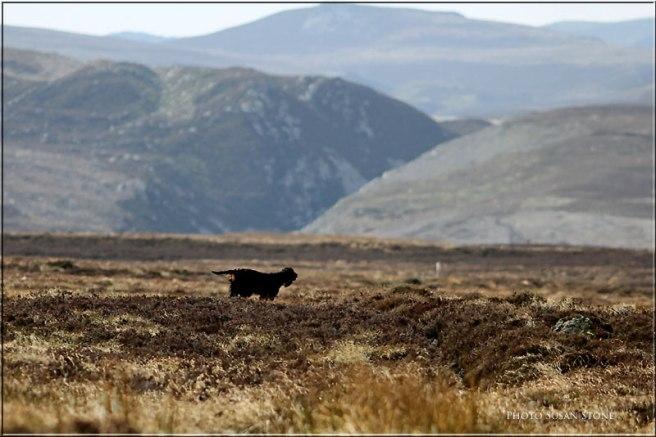 Gordon-Highlands-2012-4543