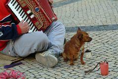 muzyczna-produkującego-żebraka-street-1748173