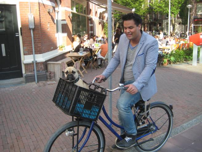 dogs in amsterdam
