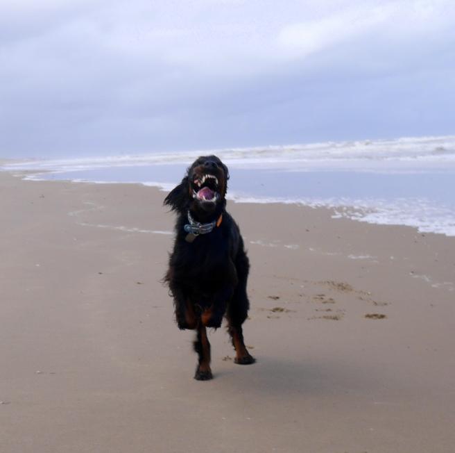 Noordwijk dog beach