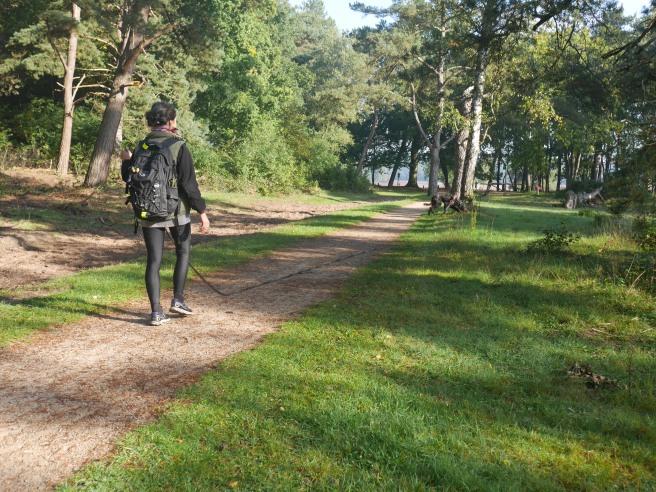 Hoorneboegse Heide